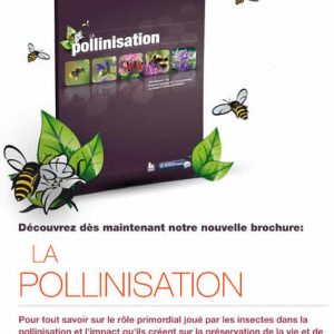 la-pollinisation