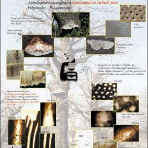 Biologie d'un champignon polypore
