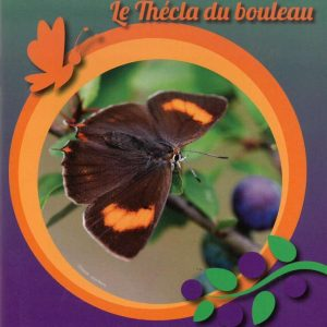 le-thecla-du-bouleau