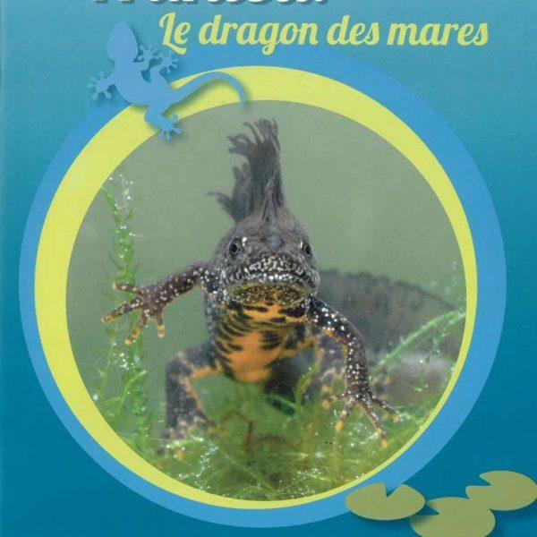le-dragon-des-mares