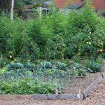 Parcelles potagères - La Motte de Terre - Jardin communautaire à Mouscron