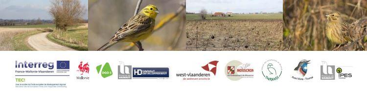 sauvegarde des oiseaux des champs